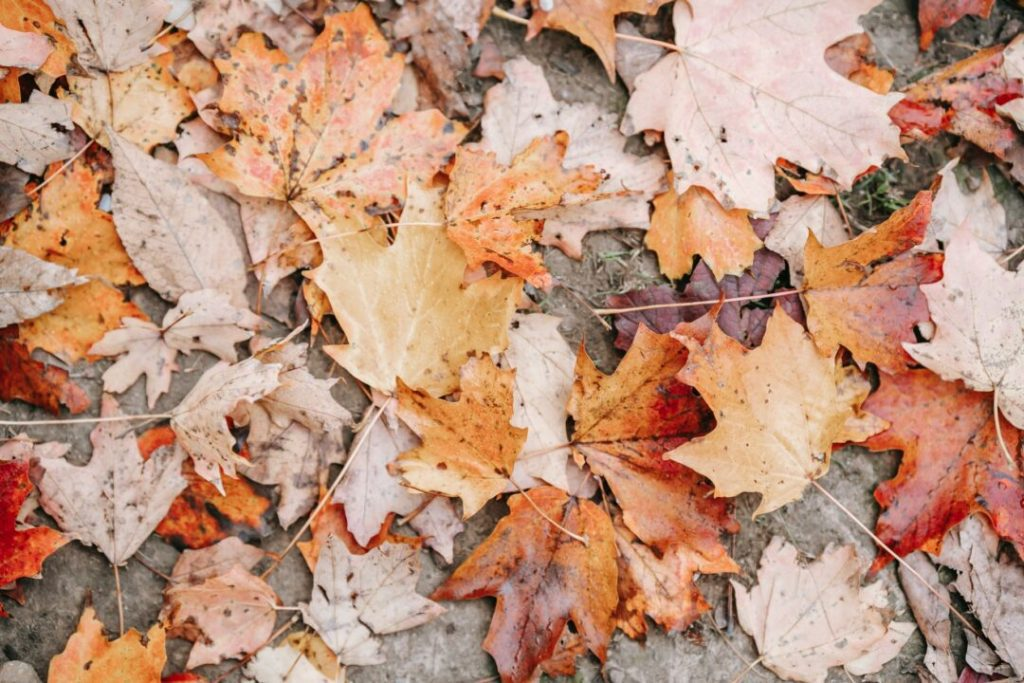 The Pros And Cons Of Leaf Hands