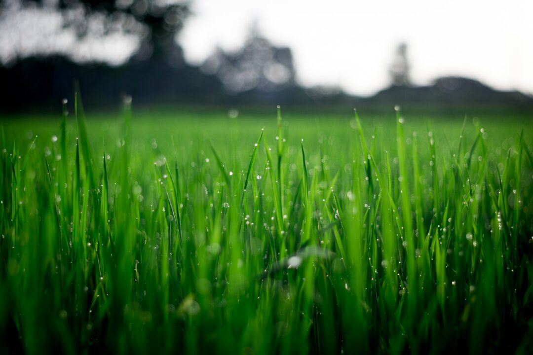 Artificial Vs. Real Grass: Benefits of Each
