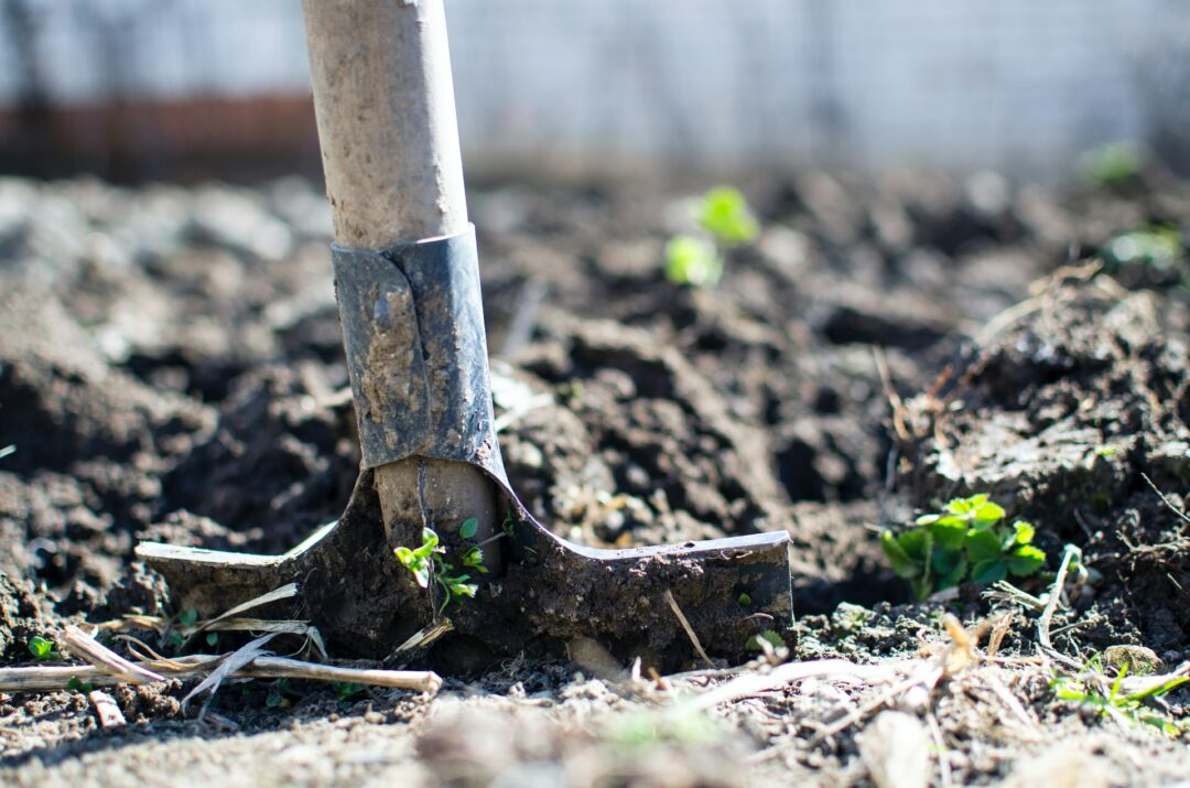 Take Care Of Your Garden Without Breaking The Bank